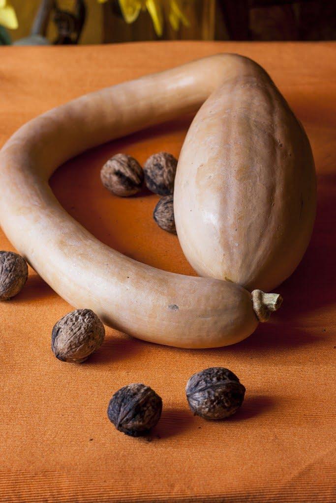 Zucca d'Albenga
